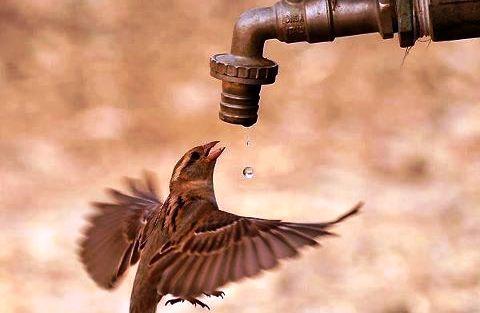 Bütün İnsanlığın Yaşam Kaynağı Su